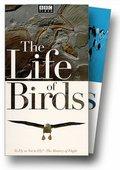 鸟的生活 海报