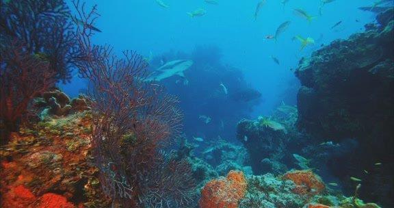 深深的海洋(男女声二重唱)